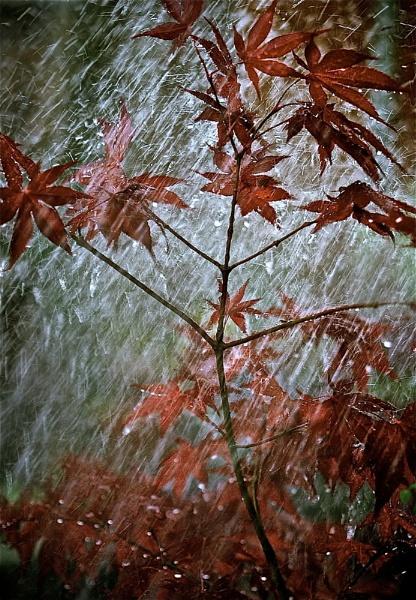 Rain, rain..... by polly470