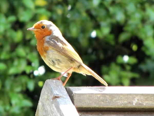 Hello Robin by HarveySquires