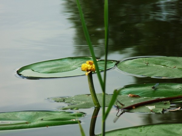 Pond life by lenalull