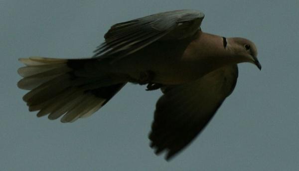 Mid Flight by TanyaHailey