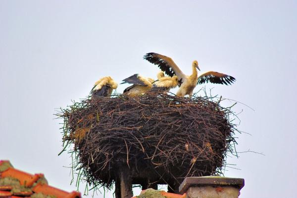 Storks by gabriel_flr