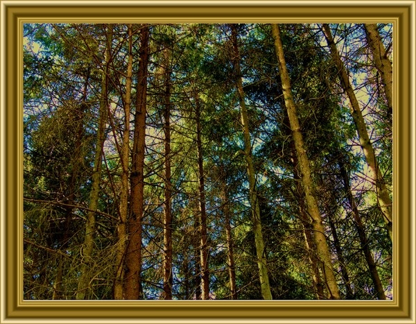 LOOKING UP by Gid