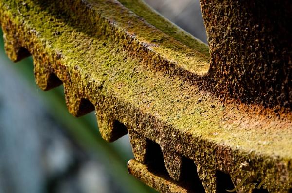 Rusty gear by jaktis