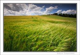 Barley Thrashing...