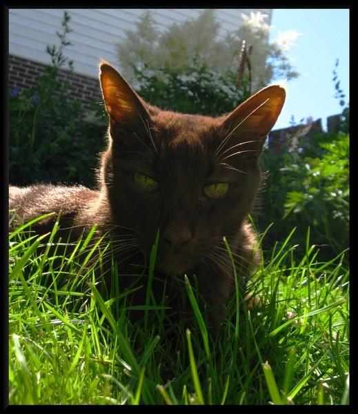 Hypno-Kitty by pattycake