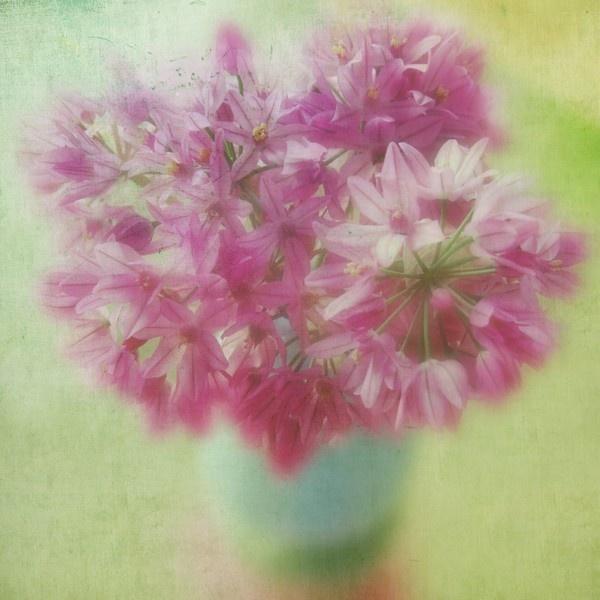 Alliums - texture Clive Sax Green plaster 2 by betttynoir