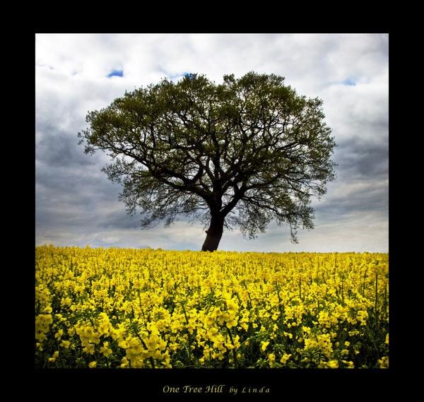 one tree hill by Mynett