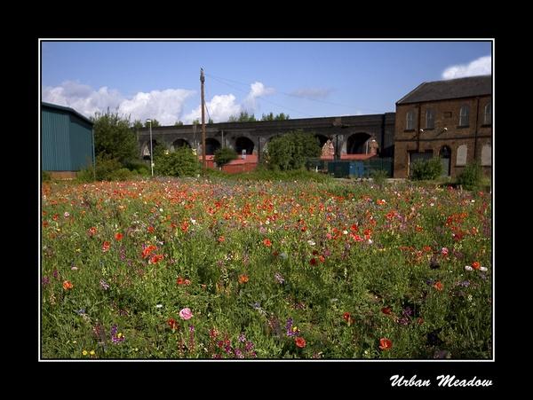 Urban Meadow by cabbie