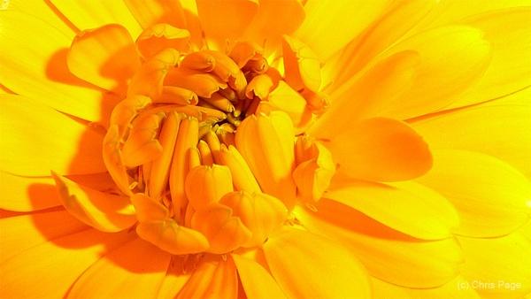 Wildflower by balance