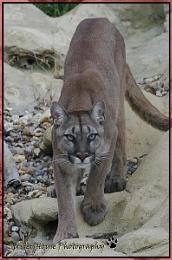 Puma @ WHF