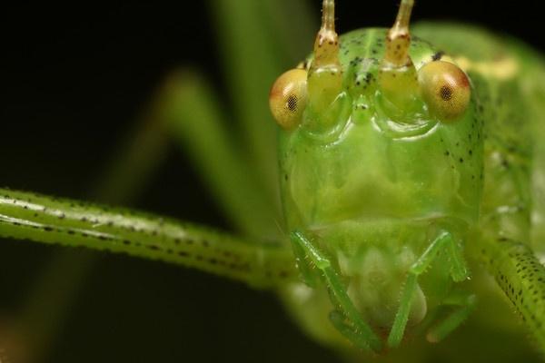 cricket by macro-junkie
