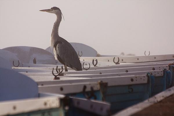 Gone Fishing by LeonSLR