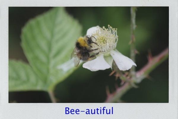 Bee-autiful by rowejay
