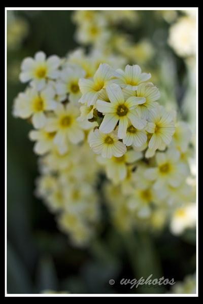 flower by jynx78