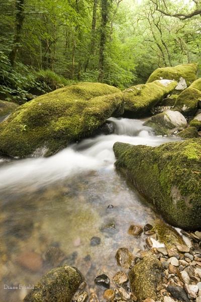 Shaugh Bridge water flowing by DianeFifield