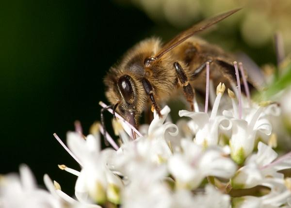 Bee and Hebee by Emmog