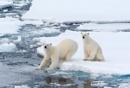 Arctic - Spitzbergen
