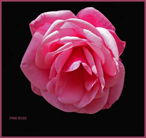 PINK by JOKEN