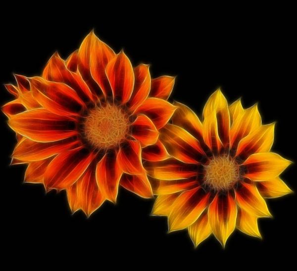 FLOWER1 by Zacian