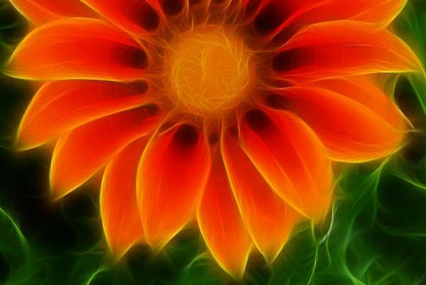 FLOWER2 by Zacian