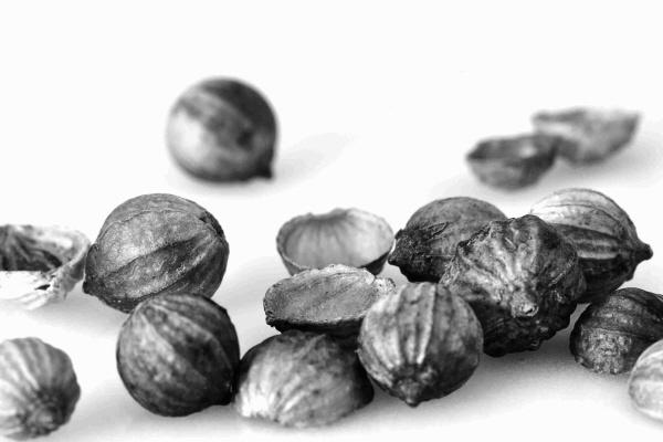 Coriander seeds by EdricCross
