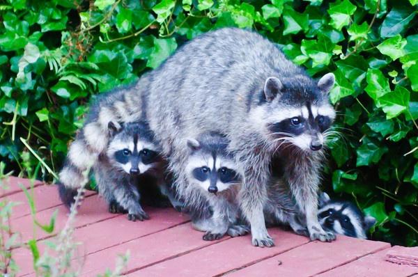 The Family by ljparis