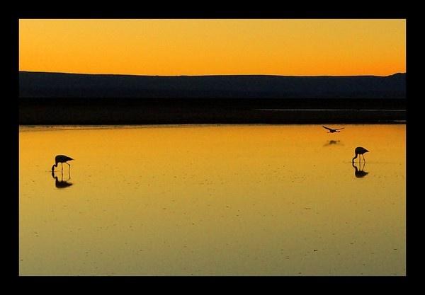 peaceful dawn by alboroto