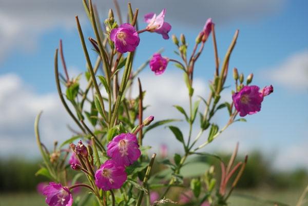 Wild flowers by smaso1