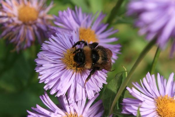 bee still by pinkpenguin