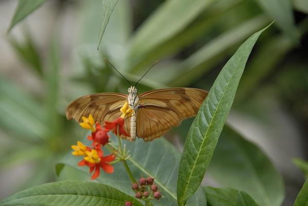 Butterfly by Mandi