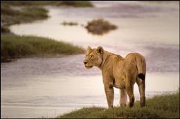 African Wildlife/Nature
