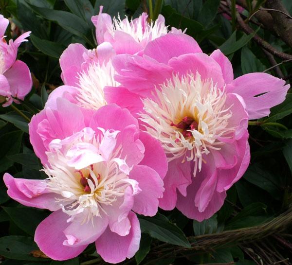 Flowers by bpjohn
