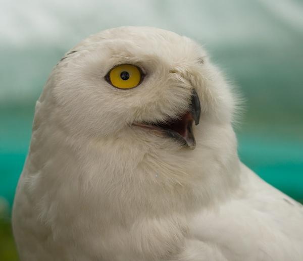 Artful owl by michaelo