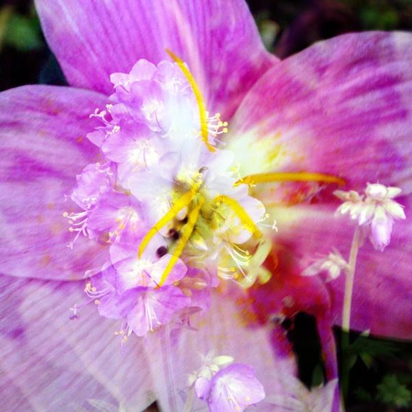 flower merge.. by Bat_Babes