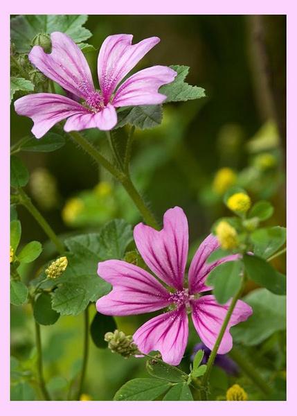 Wild Flower 3 by dnwilliams