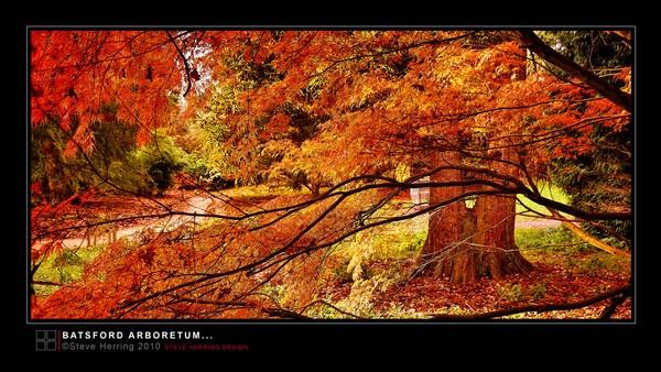 Batsford Arboretum. by sherring