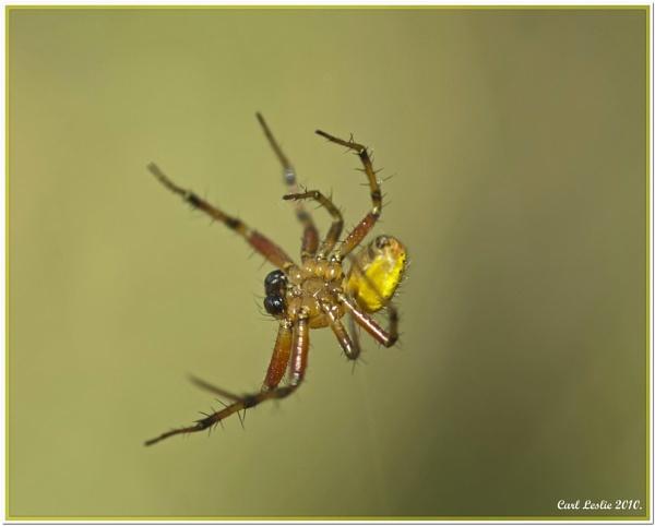 Spider 2 by torres99