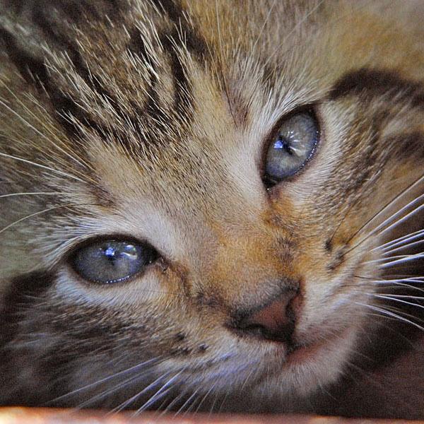 old bleu eyes by fotoboy