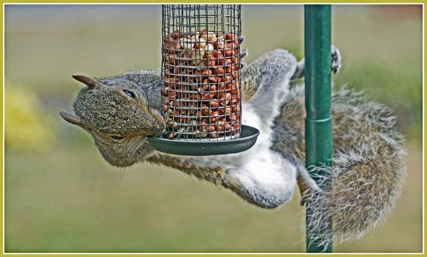 OH! NUTS. by JOKEN