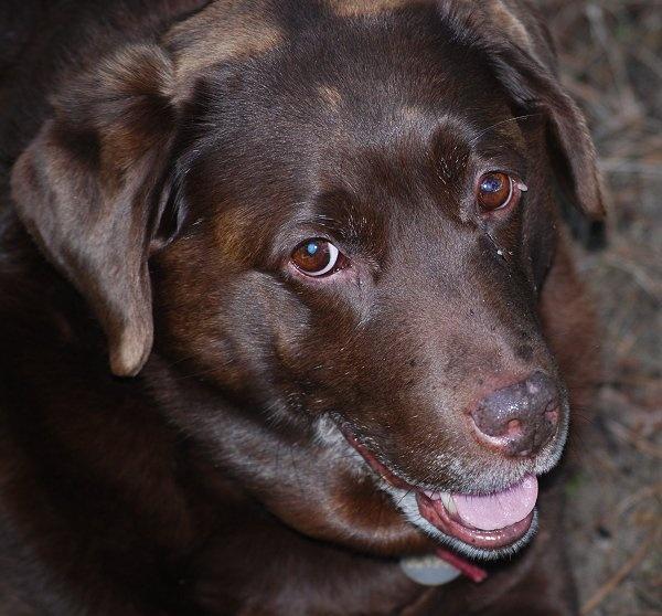 Dopey dog by brownbear