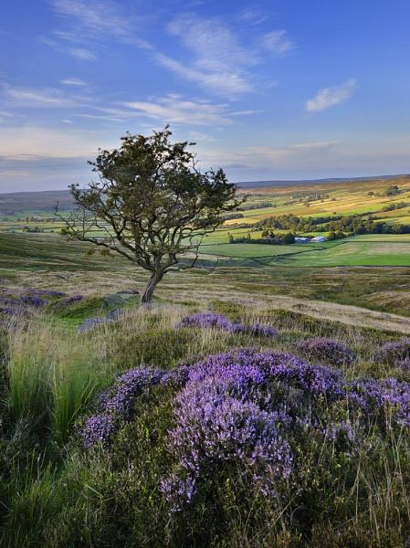 Dale View by iansnowdon