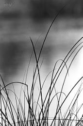 Reeds 12A