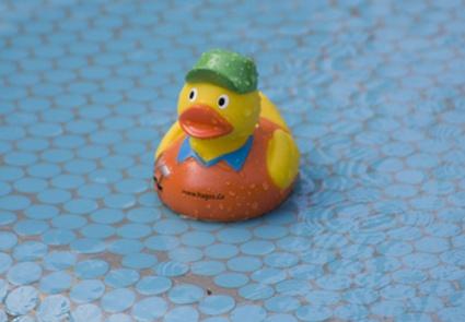 Quack Quack by dwatson8791
