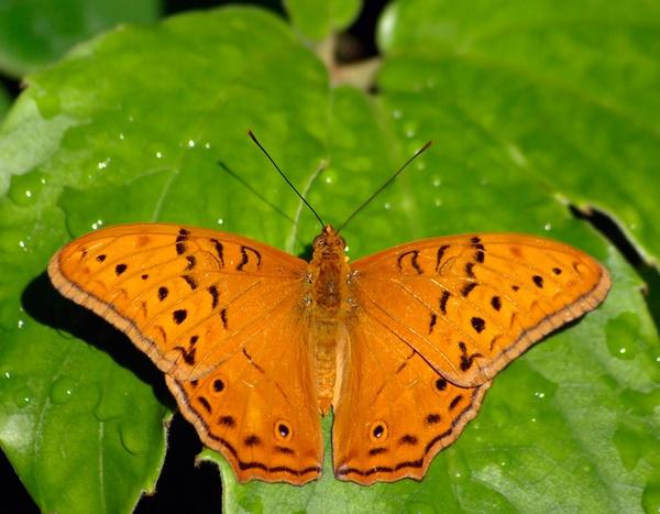 Butterfly by bigredtim