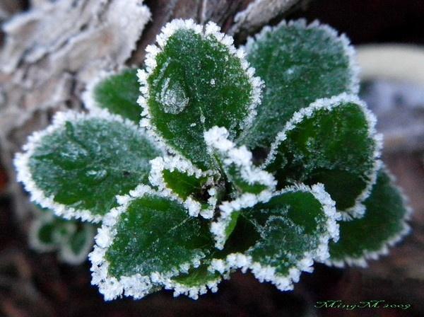 Frost by MingM