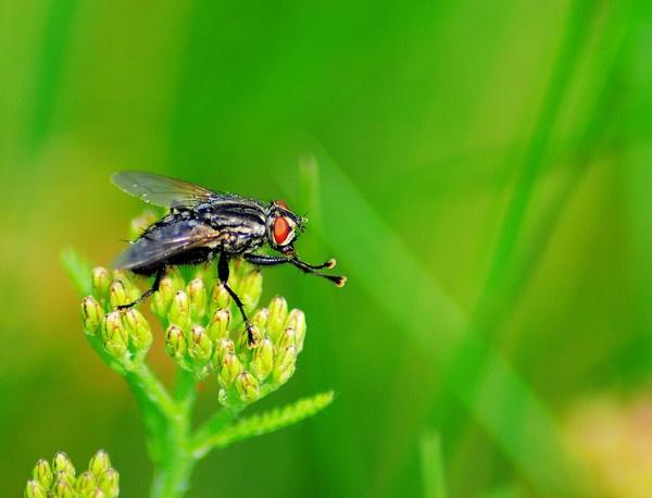 fly by gabriel_flr