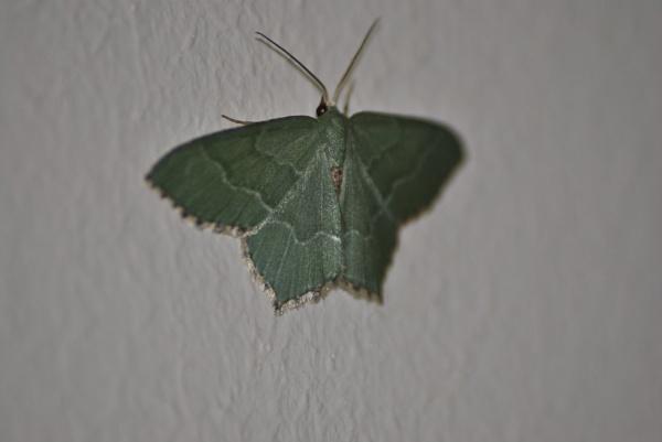 moth by kff