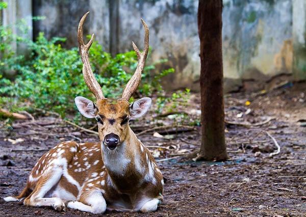 The O Deer by Artful_Dodger