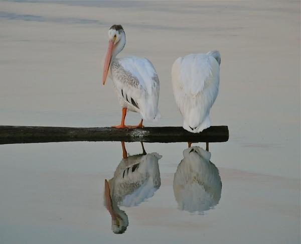 A mirror image by StuartDavie