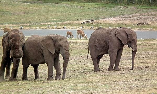 Safari Park by panda